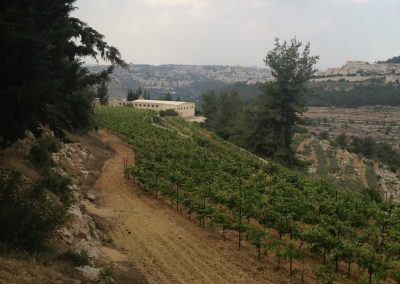 Cremisan-Winery-41