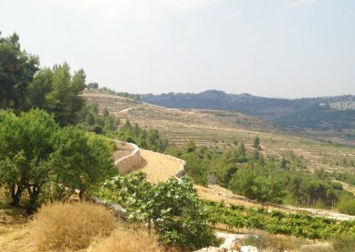 Cremisan-Winery-48